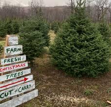Master Gardener Series: Christmas Trees @ ZOOM